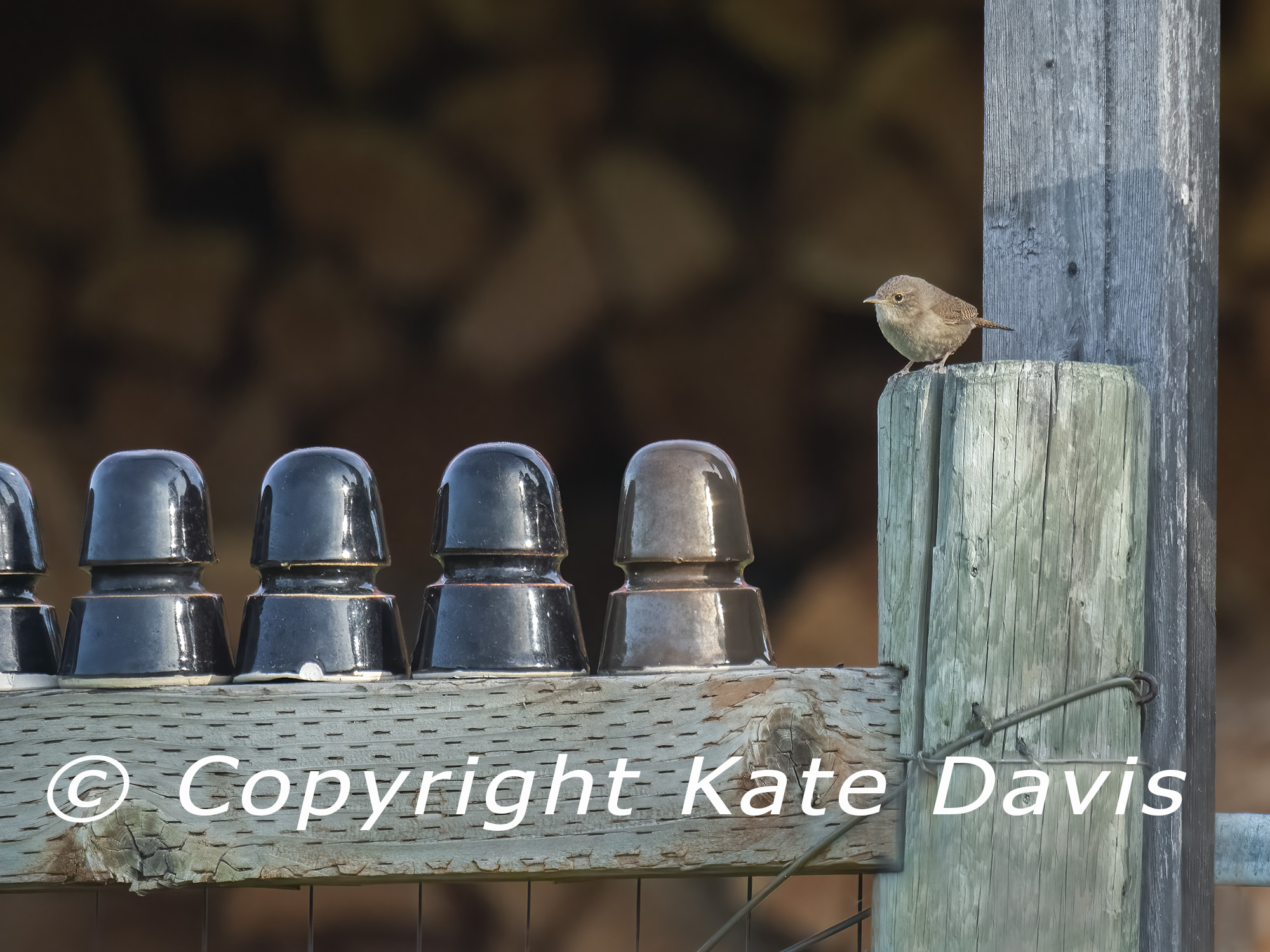 Insulators and House Wren in my yard
