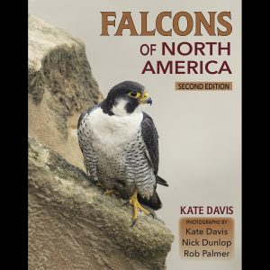 Falcons Of North America Second Edition by Kate Davis, Photographs by Kate Davis,Nick Dunlop, Rob Palmer